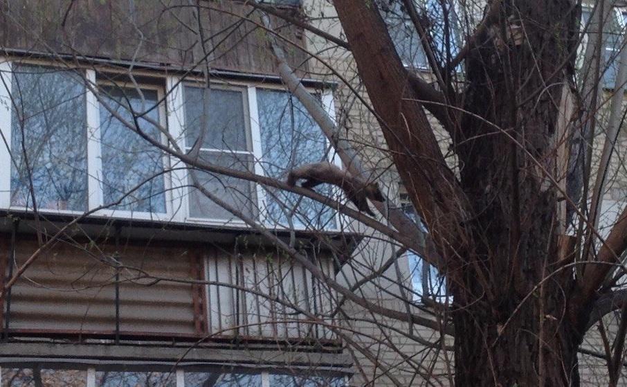Зверёк отлично прыгал по веткам