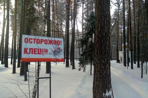 Вопреки информации из WhatsApp клещи не прячутся зимой на деревьях