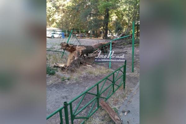Жители считают, что дерево уже давно надо было убрать