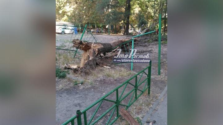 Дерево упало на детскую площадку в центре Ростова