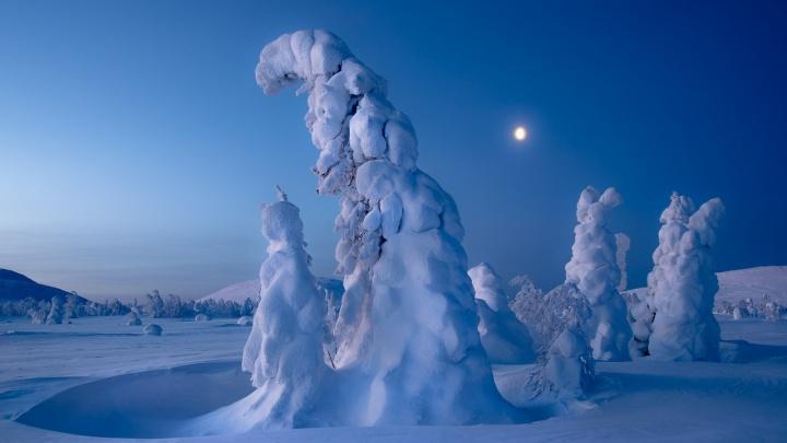Живые снежные скульптуры стали лучшим фото января