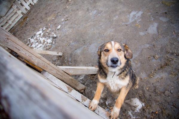 Фонду помощи животным «Бумеранг добра» может помочь любой желающий