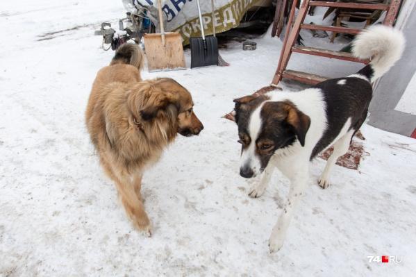 Собачья любовь: Найда бросила хозяев, чтобы жить вместе с Рексом
