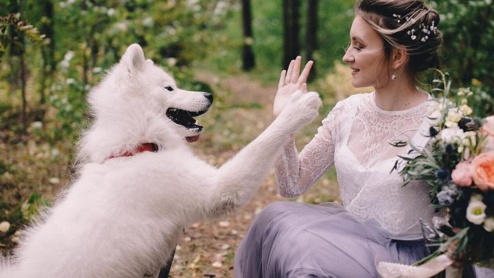 С псом под венец: 12 фото сибиряков, которые чересчур любят своих собак