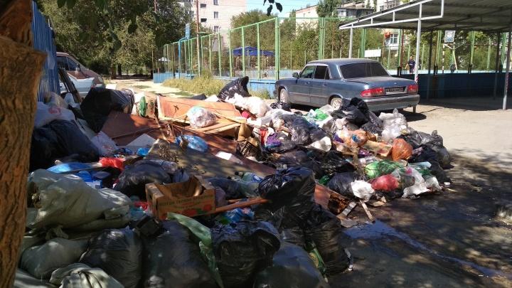«По двору бегают крысы»: волгоградцы жалуются на растущую свалку во дворе Елены Исинбаевой