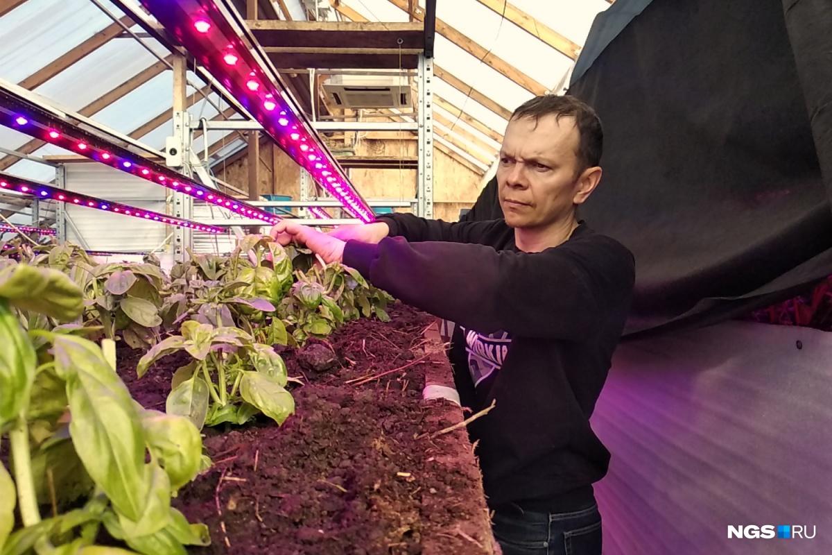 Анатолий Курушин говорит, что при всех проблемах выращивание зелени приносит ему куда больше внутреннего удовлетворения