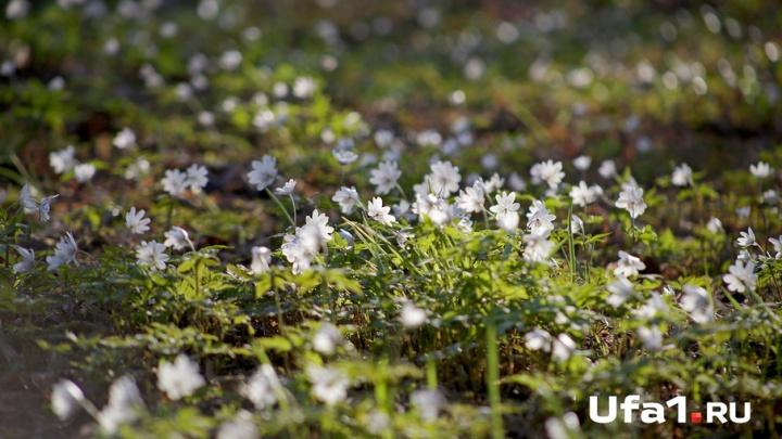 Дождь с грозой обрушится на жителей Башкирии 3 мая