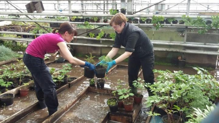 Такого еще не было: в Уфе затопило Ботанический сад