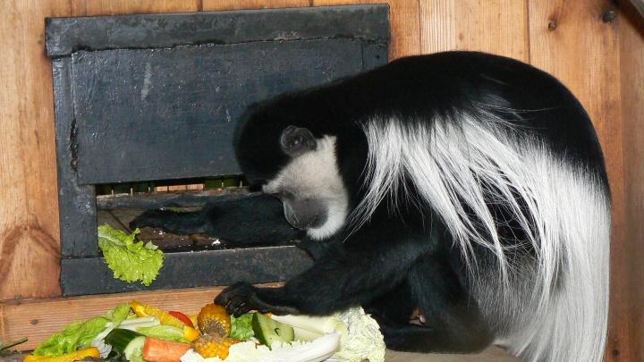 Яблоки — медведям, ягоды — птицам: екатеринбургский зоопарк объявил сбор еды для своих обитателей