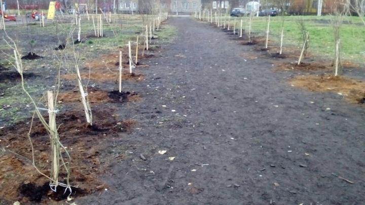 В Маймаксе высадили 150 декоративных кустарников