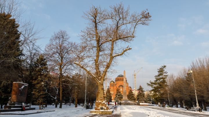 В центре Волгограда постригли легендарный сталинградский тополь