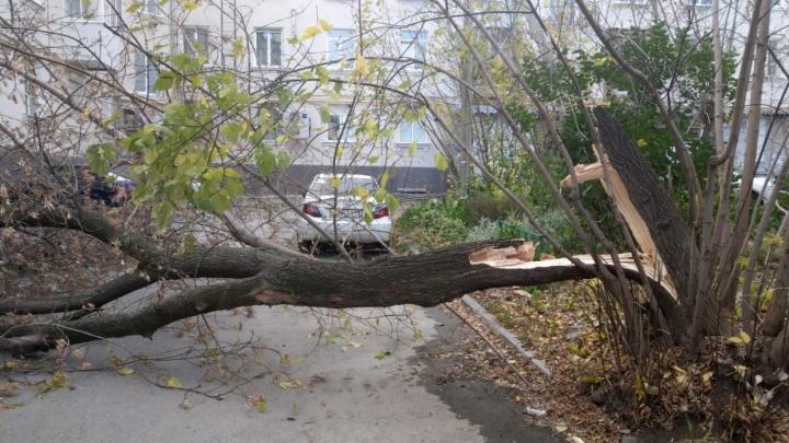 В Свердловской области три дня будет бушевать сильный ветер. Рассказываем, как вести себя на улице