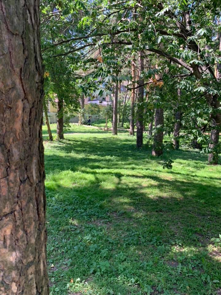 Мэр Александр Высокинский ранее пообещал, что в Зеленой Роще будут вырубать только старые и больные деревья