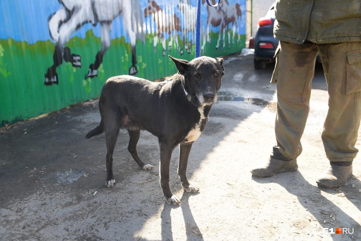 Пока Гавана жила на улице, онадошла до крайней степени истощения и отчаяния. Теперь ей пожизненно нужен специальный корм