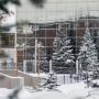 На деревьях и проводах: МЧС предупреждает о сильной изморози в Прикамье