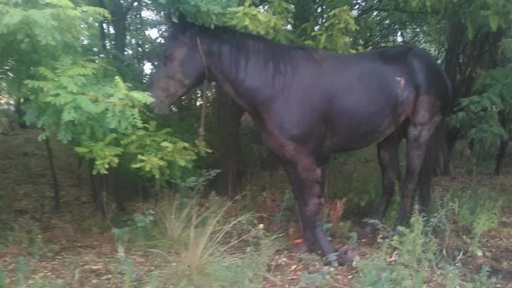 В Волгограде ищут хозяина сбитого на дороге коня