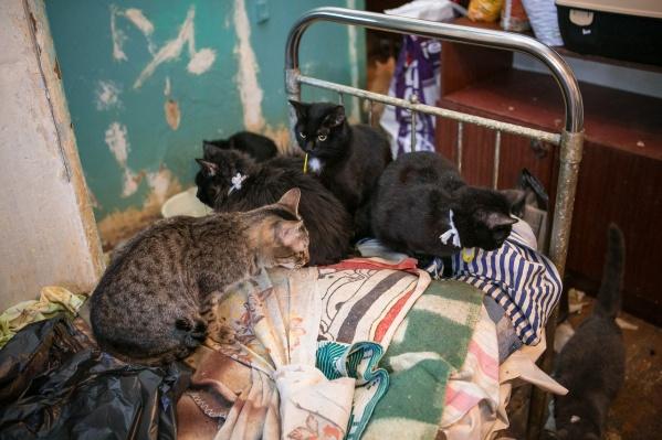 Кошки жили в однокомнатной квартире в Ленинском районе