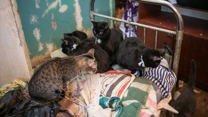 «Вонь дикая поднялась»: сибирячка развела в квартире почти 40 кошек и уехала