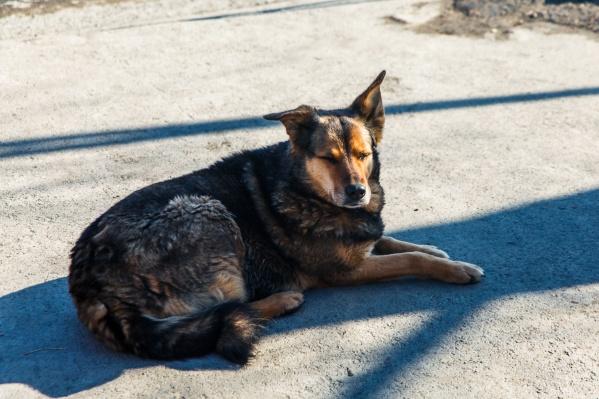 Весной участились случаи нападения собак на прохожих. Зачастую непонятно, что может спровоцировать животных на агрессию