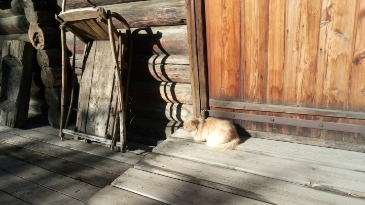 В музее Сурикова 8 лет живет кошка-хранительница