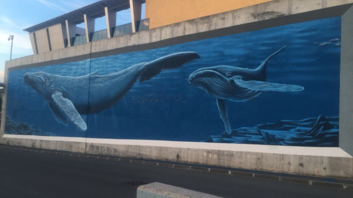 20-метровый кит, акула и батискаф: челябинский граффитист нарисовал гигантский аквариум у «Родника»