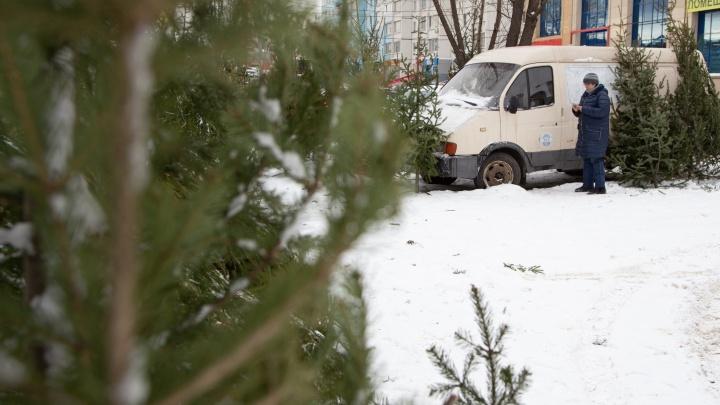 «Устроили на парковке лес»: хозяин торгового комплекса пожаловался мэру Челябинска на ёлочный базар
