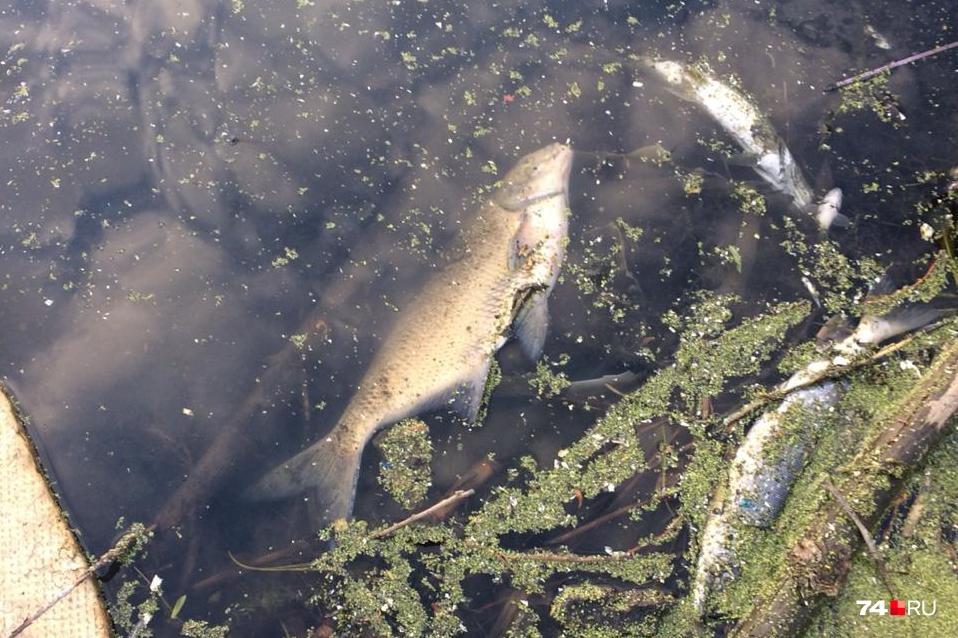 Видео снято на реке Миасс