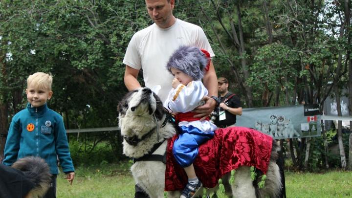 Собаки в костюмах льва, мухи и вампира собрали 100 тысяч для больного омского мальчика