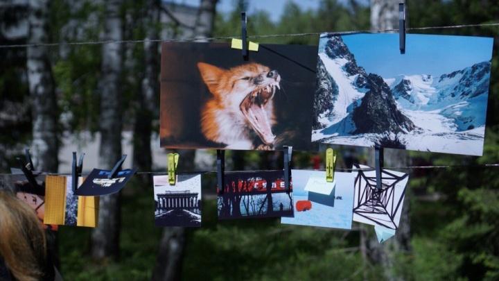 Фотографы «высушили» свои снимки между берез в сквере Победы