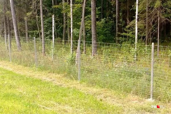 Специальные сетки будут ставить в тех местах, где дорогу переходят дикие животные
