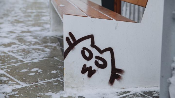 Как пройти в Котовий переулок? Замур-р-рчательный тест для жителей Тюмени ко Дню кошек