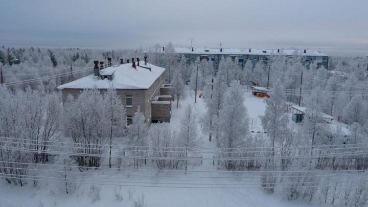 Власти Приморского района объяснили, почему волки в Талагах перешли с зайцев и мышей на собак