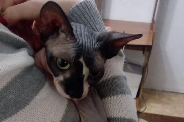 Котик забрался в раковину и зацепился лапой за сливное отверстие — вызволять его пришлось спасателям