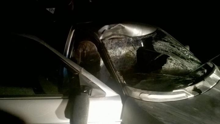 В Ярославской области легковушка сбила лося. Есть пострадавшие