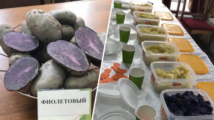 В Самарской области начали выращивать фиолетовый картофель
