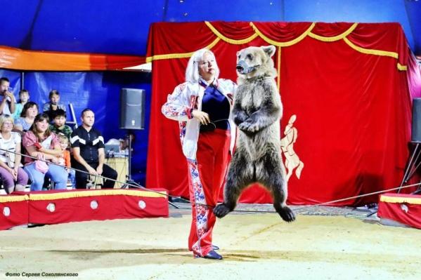 Маленькая медведица — начинающая артистка цирка
