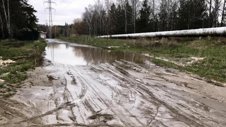 Природу надо беречь: чиновники объяснили, почему не будут ремонтировать дорогу до Академгородка