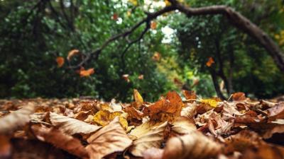 Температурные качели: какая погода ждет ростовчан на этой неделе