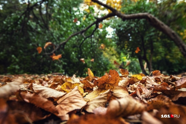 На предстоящей неделе ростовчан ожидает приятная осенняя погода