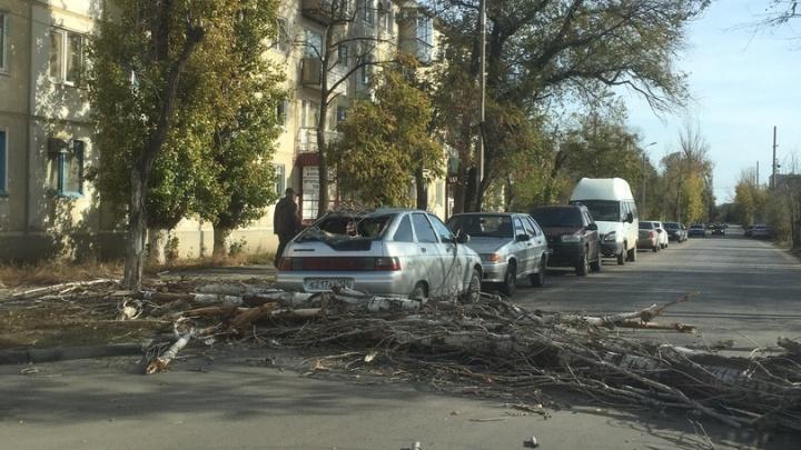 «Почему их не спиливают?»: в Волгограде сильный ветер валит деревья
