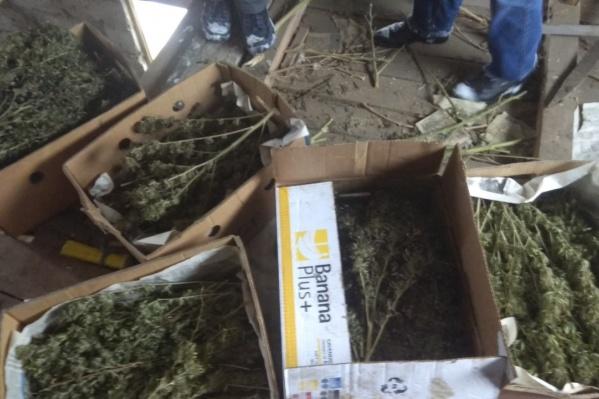 Высушенные растения лежали в картонных коробках