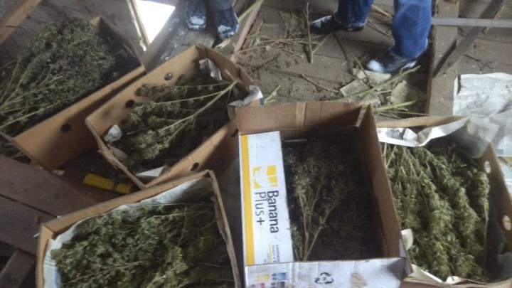 У жителя Самарской области нашли обрез и 9,5 килограммов конопли и марихуаны