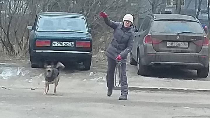 «Псы бегают толпой»: жители Брагино ополчились на собачников, отпускающих питомцев с поводка