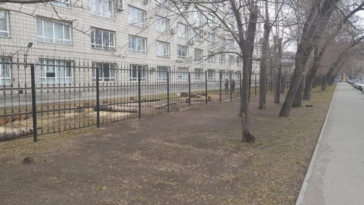 Аллеи ради: возле корпуса НГТУ на Новогодней спилили деревья