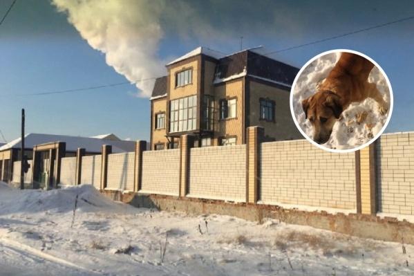 Спасенному псу дали кличку Храбрый