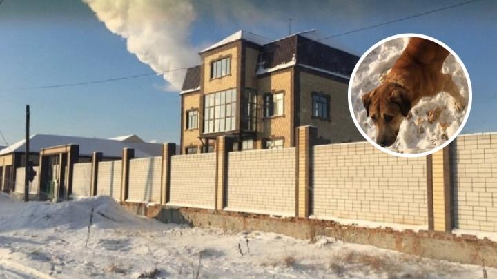 Тюменцы ищут дом оголодавшему псу, хозяин которого находится в колонии