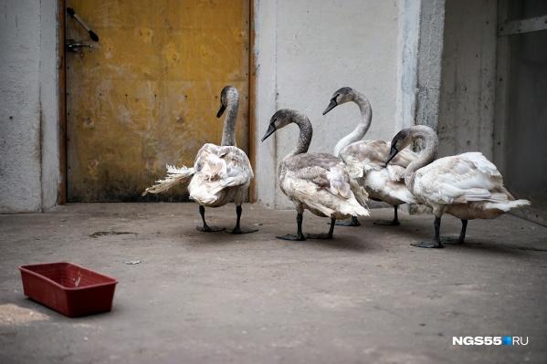 Птицы живут в просторной студии с отдельной спальней