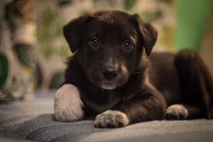 Один из 14 спасённых щенков