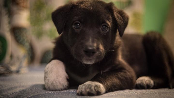 Неравнодушные новосибирцы спасли 14 щенят из оврага за «Ройял Парком»