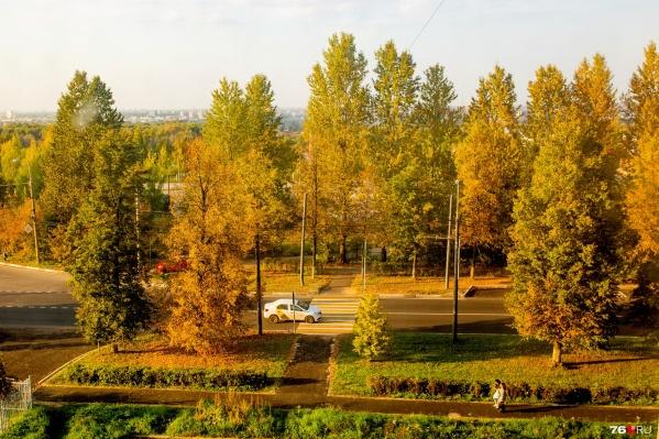 В последние дни сентября ярославцы смогут полюбоваться золотой осенью